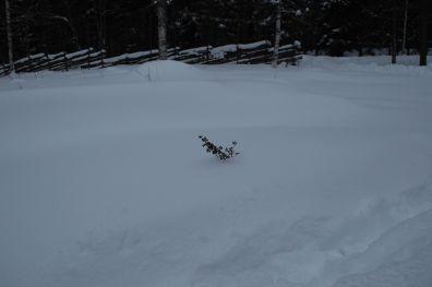 januar 2014 sne2