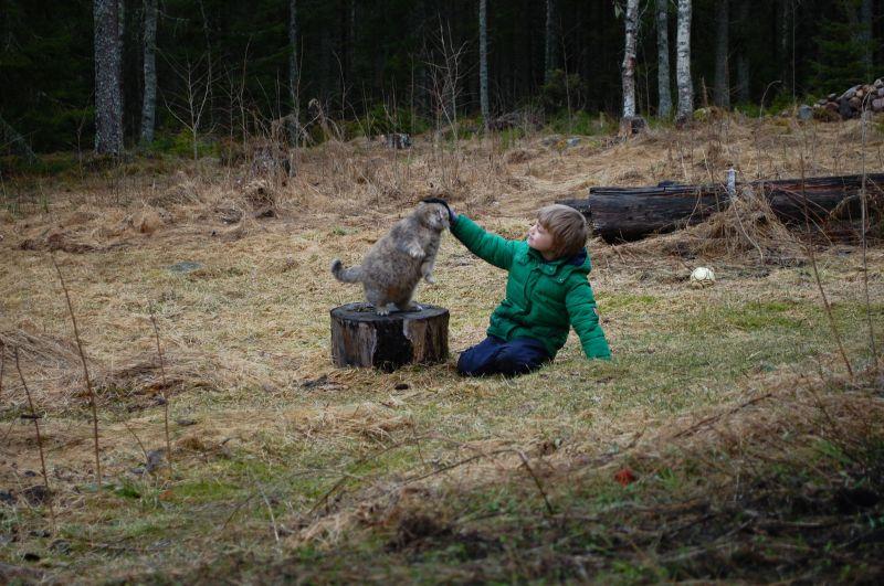 april 2016 dreng og kat