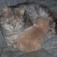 En kat, to katte, tre-syv-ni kaos-katte!