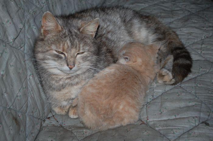 En kat, to katte, tre-syv-nikaos-katte!